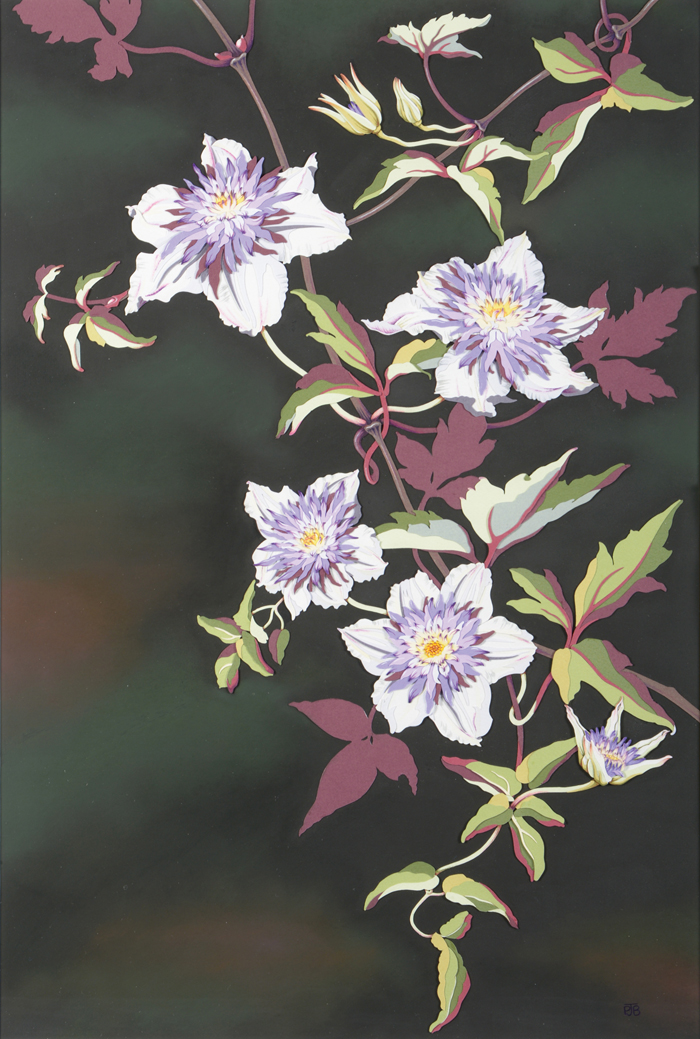 clematis-resized