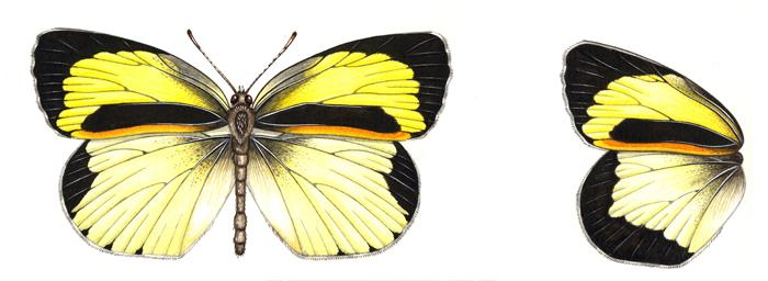 barred-yellow-resized