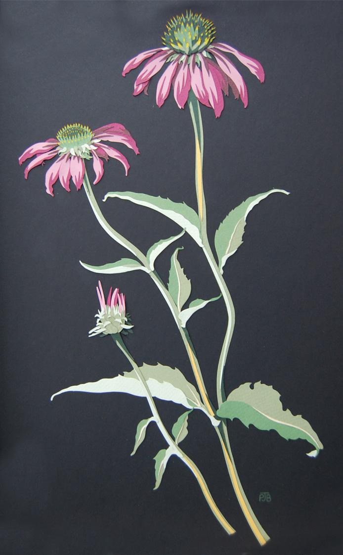 echinacea-resized