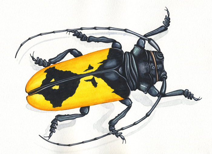 yellow-longhorn-beetle-resized