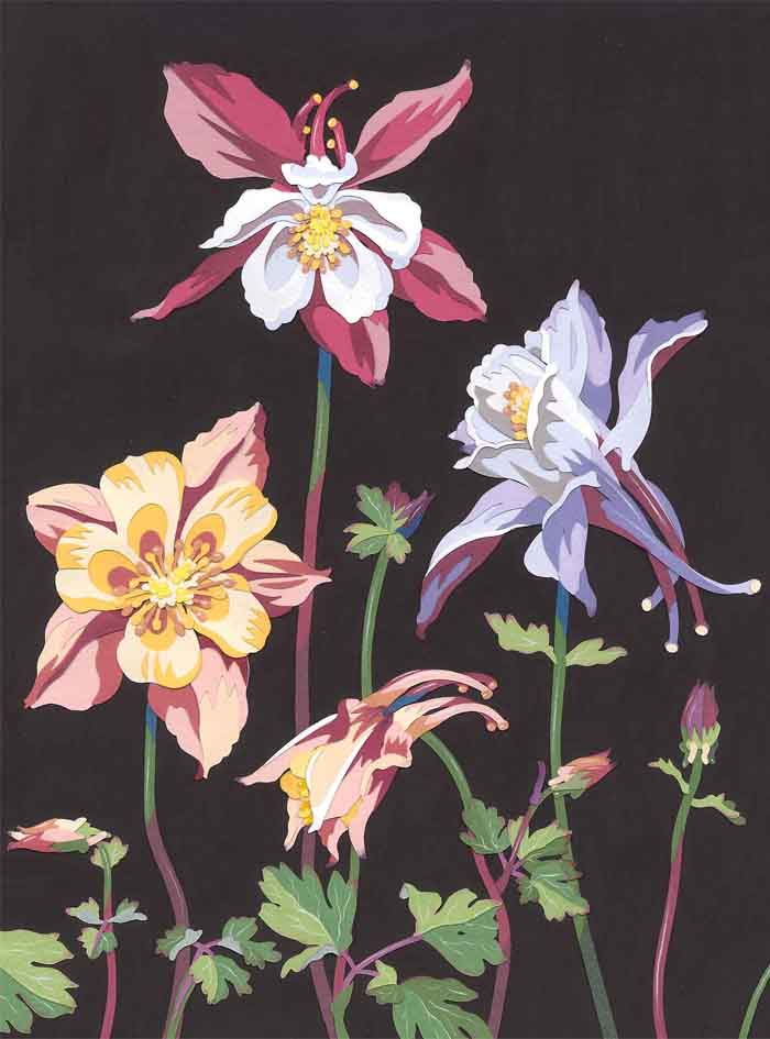 Columbines_Resized
