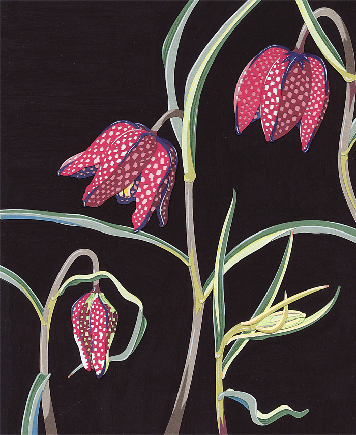 Fritillaries_Resized