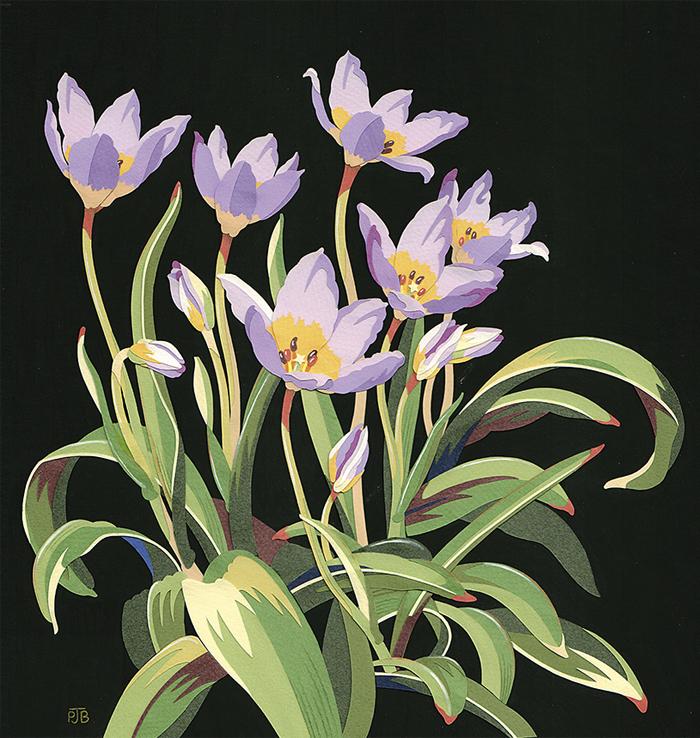 TulipsSaxatillis_Resized